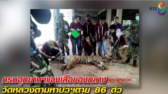 กรมอุทยานฯแจงเสือของกลางวัดหลวงตามหาบัวฯตาย 86 ตัว