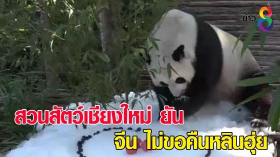 """สวนสัตว์เชียงใหม่ ยันจีนไม่ขอคืน """"หลินฮุ่ย"""" เตรียมผ่าพิสูจน์ """"ช่วงช่วง"""""""