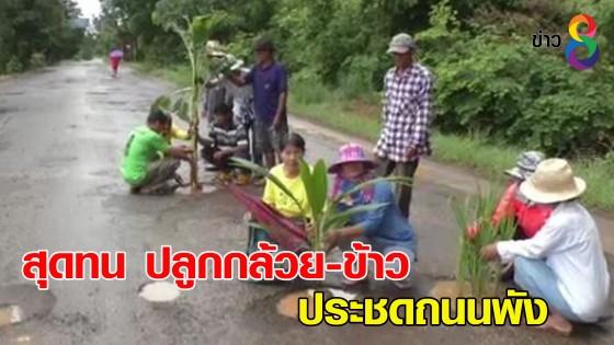 ชาวบ้านสุดทน ปลูกต้นกล้วย-ต้นข้าว กลางถนน ประชดถนนพัง