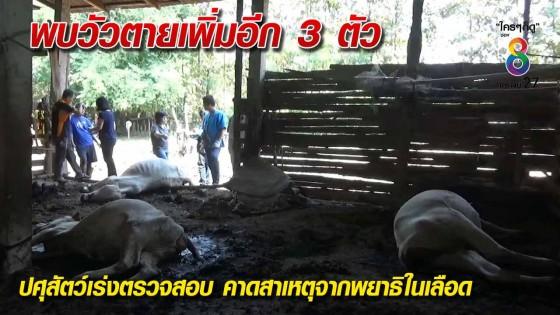 พบวัวตายเพิ่มอีก 3 ตัว ปศุสัตว์เร่งตรวจสอบ...