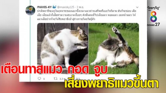 จักษุแพทย์เตือนทาสแมว กอด จูบ แมว เสี่ยงพยาธิแมวขึ้นตา หวิดตาบอ...
