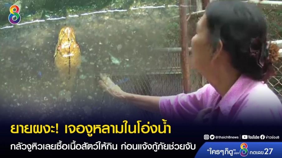 ยายผงะ! เจองูหลามในโอ่งน้ำ กลัวงูหิวเลยซื้อเนื้อสัตว์ให้กิน ก่อนแจ้งกู้ภัยช่วยจับ