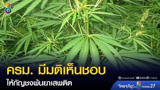 ครม. มีมติเห็นชอบกัญชงพ้นยาเสพติด เล็งดันเป็นพืชเศรษฐกิจ