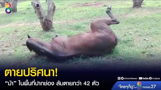 """ตายปริศนา! """"ม้า"""" ในพื้นที่ปากช่อง ล้มตายกว่า 42..."""