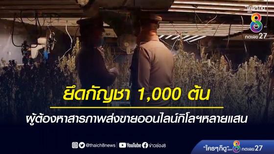 ตำรวจบุกค้นโกดังปลูกกัญชา ย่านอ่อนนุช 82 ยึดได้กว่า 1,000...
