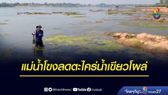 แม่น้ำโขงลดตะไคร่น้ำเขียวโผล่กระทบจับปลา...