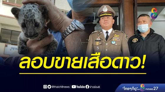 ตำรวจ ปทส. จับชาวอินเดียลักลอบขายลูกเสือดาว อ้างได้มาจากสวนสัตว์ใกล้...