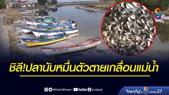 ชิลีเจออีก! ปลานับหมื่นตัวตายเกลื่อนแม่น้ำ