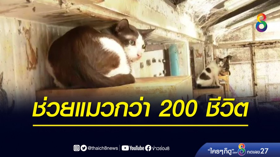 ทาสแมวน้ำตาซึม! เจ้าหน้าที่เข้าช่วยเหลือแมวกว่า 200 ชีวิต ถูกเจ้าของทิ้ง