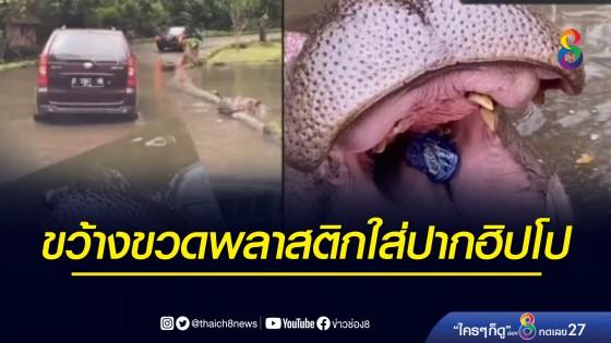 หญิงวัย 64 ขว้างขวดพลาสติกใส่ปากฮิปโป ในซาฟารีอินโดนีเซีย