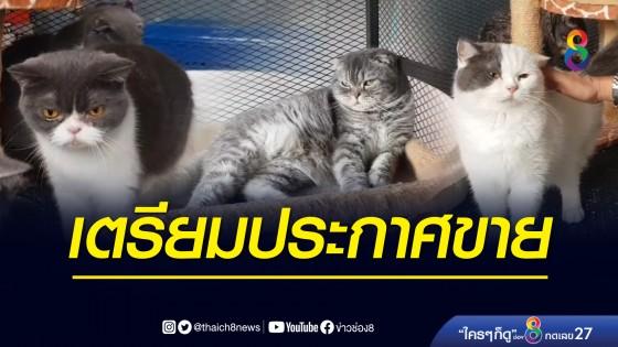 ป.ป.ส. เตรียมขายทอดตลาด น้องแมว ของกลางคดียาเสพติด