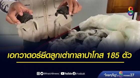 ลูกเต่ากาลาปาโกส 185 ตัว ถูกห่อพลาสติกซุกกระเป๋าเดินทาง...