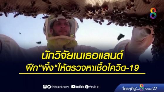 """นักวิจัยเนเธอแลนด์  ฝึก """"ผึ้ง""""..."""