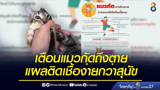 แพทย์เตือนแมวกัดอาจถึงตาย! เหตุแผลติดเชื้อง่ายกว่าสุนัขกัด