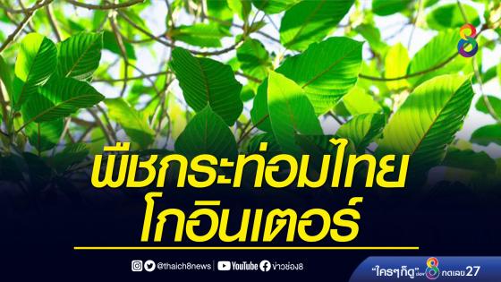 จ่อส่งออกพืชกระท่อมไทยไปตลาดโลก คาดทำกำไรมหาศาล