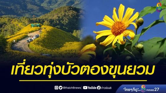 แม่ฮ่องสอนชวนเที่ยวทุ่งบัวตอง ขุนยวม ใหญ่ที่สุดในไทย