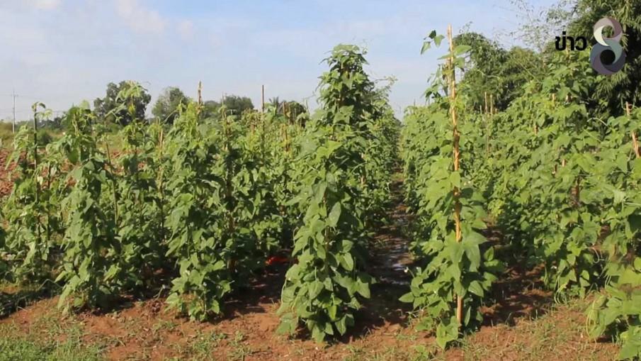 ปลูกพืชผักสวนครัวผสมผสานขายสร้างรายได้เดือนละ2หมื่น